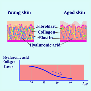 Figure 3: Fascia ages